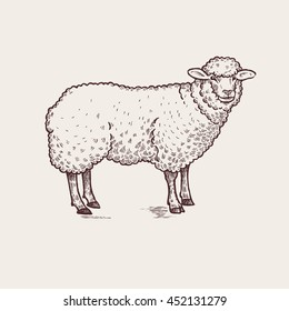 Sheep. Series of farm animals. Graphics, hand drawing. Sketch. Vintage engraving style. Design for packaging agricultural products, signage, advertising farm products shops