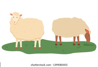 Sheep vector, isolated domestic animals on pasture, farmyard fluff pet breeding and tending, care for fluffy mammals with wool, lamb standing on grass