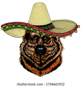 Sheepherd dog, sheepdog portrait. Sombrero mexican hat. Head of pet. Animal face.