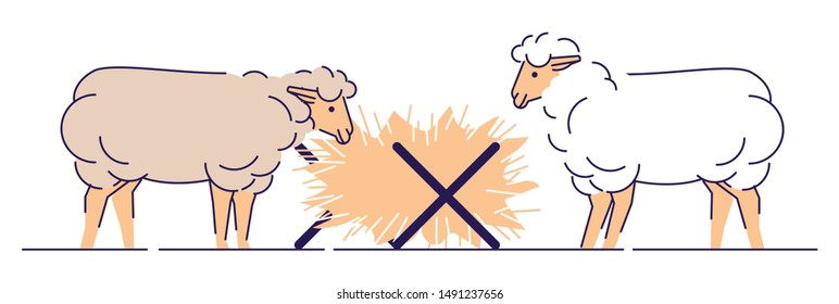 Sheeps eating hay flat vector illustration. Livestock farming, animal husbandry cartoon concept with outline.