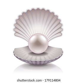 pearl shell images stock photos vectors shutterstock
