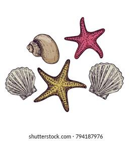 Shells and starfish on white background, cartoon illustration. Vector