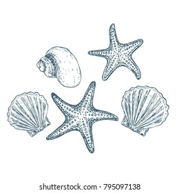 Shells and starfish on white background, cartoon illustration. Vector