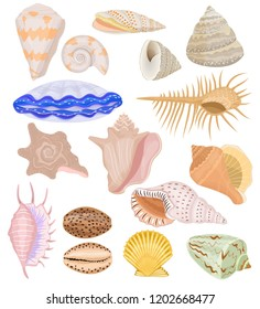 Shells vector marine seashell and ocean cockle-shell underwater illustration set of shellfish and clam-shell or conch-shell isolated on white background