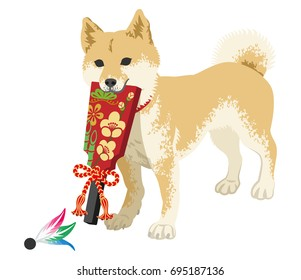 Shiba inu playing with the Japanese Battledore