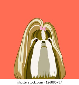 Shih Tzu, The buddy dog