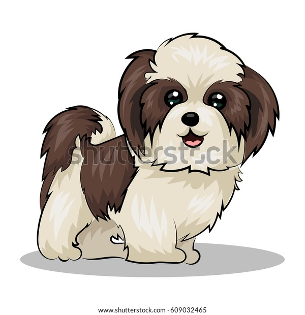 Shih Tzu Dog Stock Image Download Now