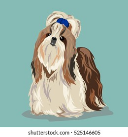 """Shih Tzu"" dog at one color background"
