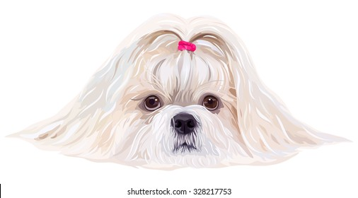 Shih tzu dog portrait in bright white colors