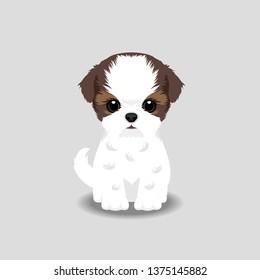 Shih Tzu Puppy Vector Illustration. Dog isolated