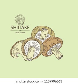 Shiitake: mushroom and a bit of shiitake. Mushroom. Vector hand drawn illustration