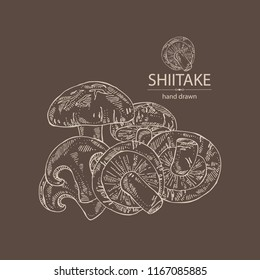 Shiitake: mushroom and a bit of shiitake. Mushroom. Vector hand drawn illustration