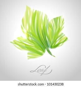 Shiny green striped maple leaf. Vector illustration.