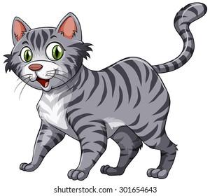 Short hair cat with gray fur