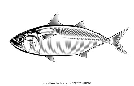 Short mackerel. Vintage hand drawn illustration in vector