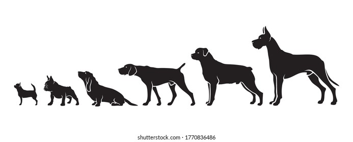 Shorthair dog breeds by size - isolated vector illustration