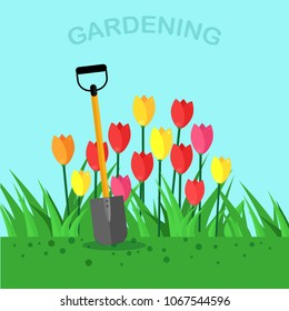 Shovel, spade with flowers, tulip, red roses isolated on blue background. Garden tool, equipment for farm. Gardening, agriculture, cultivation. Spring work. Vector flat design