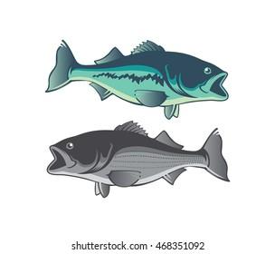 Shown  fish striped bass