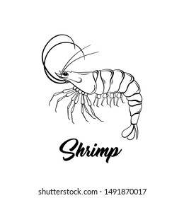 Shrimp black and white vector illustration. Marine life hand drawn monochrome sketch. Crustacean animal engraving. Seafood restaurant logo. Fresh prawns store poster, banner design element