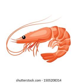 Shrimp icon in flat style, fresh sea food. Isolated on white background. Vector illustration.