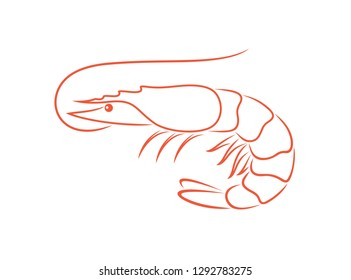 Shrimp outline. Isolated shrimp on white background. Prawns outline. EPS 10. Vector illustration