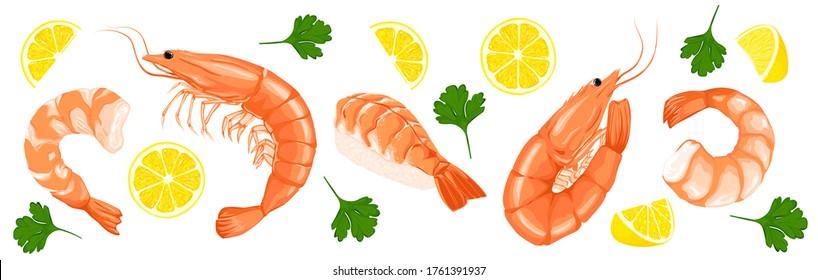 Shrimp prawn icons set. Shrimp, parsley, lemon drawing on a white background. Collection shrimp, shrimp without shell, meat, sushi. Realistic vector illustration