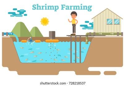 Shrimp / prawns farming