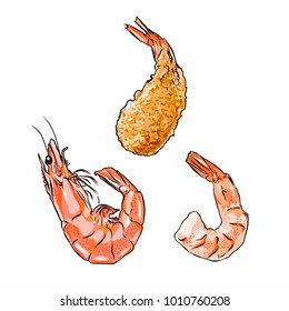 Shrimp in shell, without shell and fried. Vector illustration isolated