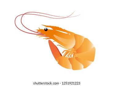 Shrimp vector on white background, isolated.