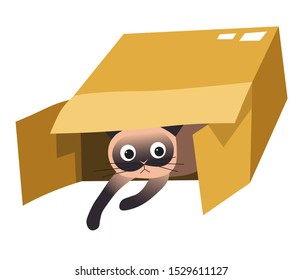 Siamese cat in open cardboard box, looking, sitting or getting out. Cute brown pet with surprised look. Schrodinger concept, humour animal art. Colourful vector illustration on white background.