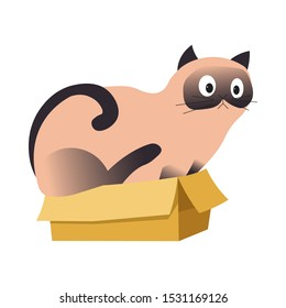 Siamese cat sitting in a cardboard box, too big to fit there, cute pet with surprised expression, schrodinger concept, animal art, colorful flat vector illustration on white background