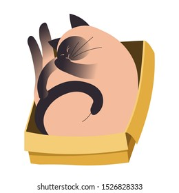 Siamese cat sleeping curled up in a cardboard box, rolled into ball, pet with paws on face, closed eyes, schrodinger concept, colorful flat vector illustration, white background