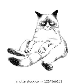 Siamese grumpy cat isolated on a white background. Vector hand drawn  illustration