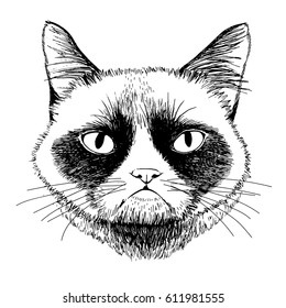 Siamese grumpy cat isolated on a white background. Vector hand drawn vintage  illustration.