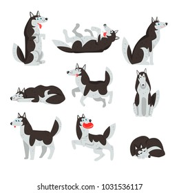 Siberian husky character sett, dog in different actions vector Illustrations on a white background