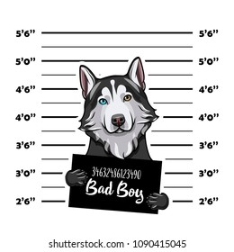 Siberian husky criminal. Police banner. Arrest photo. Police placard, Police mugshot, lineup. Police department banner. Dog offender. Vector illustration.