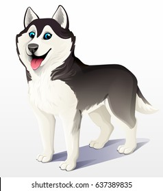 Siberian husky dog. Black and white. Stand. He put his tongue out, smiling. Cartoon. Vector illustration on a light background. 3D.