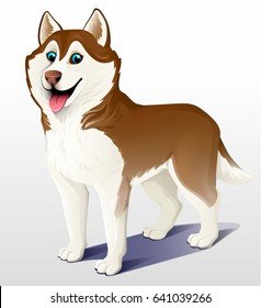 Siberian husky dog. Brown and white. Stand. He put his tongue out, smiling. Cartoon. Vector illustration on a light background. 3D.