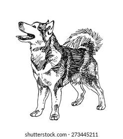 siberian husky Dog. hand drawn. Vector illustration