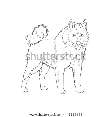 Siberian Husky Factory Specialized Breed Northern Stock Vector