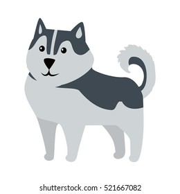 Siberian Husky medium size working dog breed isolated on white. Recognizable by thickly furred double coat, erect triangular ears, and distinctive markings. Belongs to the Spitz genetic family. Vector