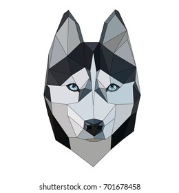 Siberian Husky polygonal geometric vector icon