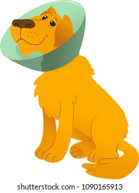 Sick sitting dog with buster collar - golden retriever. Vector illustration