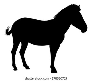 Side Profile Image of Zebra Standing Silhouette