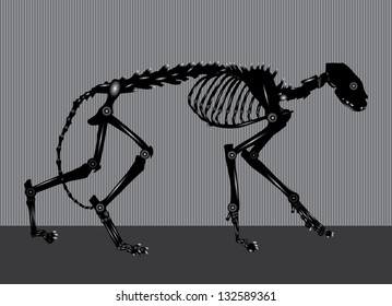 side view of cat skeleton