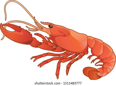 Side view red lobster realistic illustration