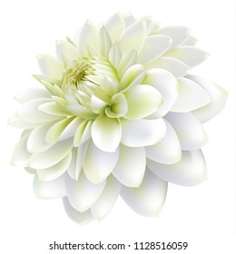 Side view of white chrysanthemum flower isolated on white background