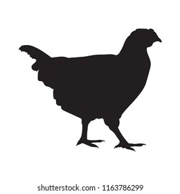 Sign chicken. Isolated black silhouette chicken on white background. Vector illustration
