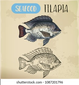 Sign with tilapia or cichlid fish. Sketch of fish or hand drawn seafood trophy, water animal for restaurant menu or shop banner. Underwater and nautical, marine and fishing, catch and wildlife theme