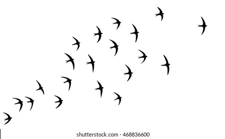 Silhouette of the 20 birds in flight. Screaming party of the swifts.